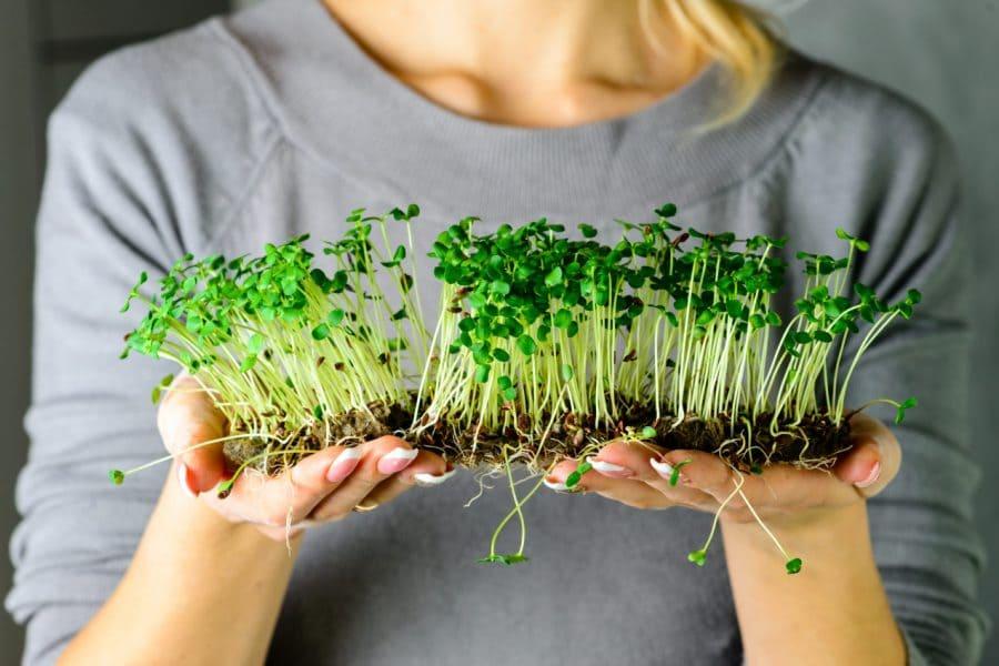 Бизнес на микрозелени